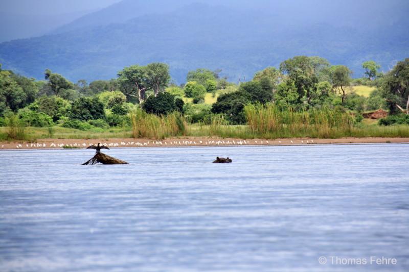 Zambezi, Sambia