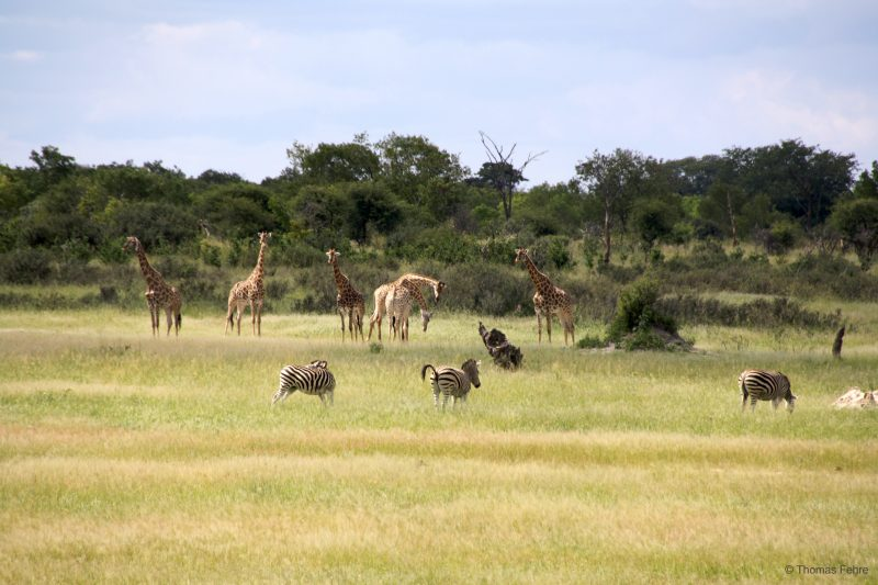 Hwange Nationalpark, Simbabwe
